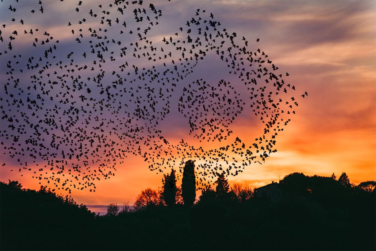 content migration